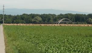 Pont Rotary über Broyekanal bei Sugiez (Radwegbrücke)