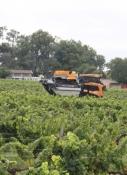 Weinlese im Bordeaux