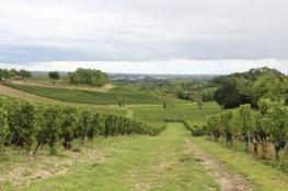 Weinfelder im Bordeaux