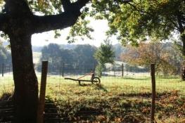Herbstliche Morgenstimmung am Radweg