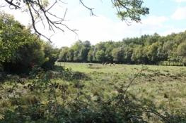 Pferdeherde bei Champmillon