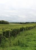 Weinfelder an der Loire