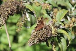Ein Schmetterling am Wegesrand
