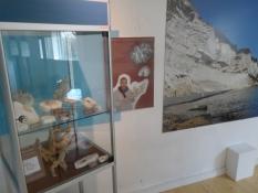 Naturudstillingen. En asylansøger har fundet mange fossiler/In the nature exhibition