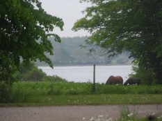 Smuk rute langs med Guldborgsund/Lush beauty along the Guldborg Sound