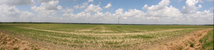 Landschaft hinter Virovitica
