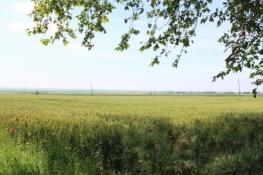 Landschaft bei Aljmaš