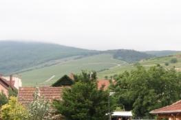 Weinberge bei Tokaj