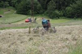 Landwirtschaft im Muszynka-Tal