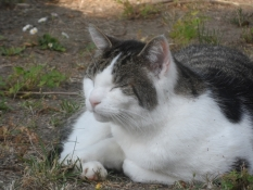 Katten Bolle nyder aftensolen/The cat ʺBolleʺ enjoys the evening sun