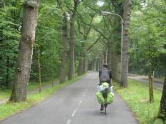 Flot egeallé fører ind til Wassenaar/Leafy and lush oak alley into Wassenaar
