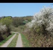 Bahntrassen-Velo-Weg in Waldbrunn (Westerwald)-Fussingen
