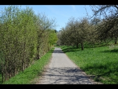 Velo-Weg (Allee) in Wiesbaden-Erbenheim