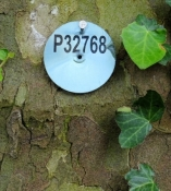 Canal du Midi, label on a plane tree
