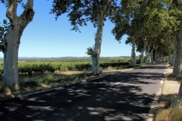 Landscape near Capestang