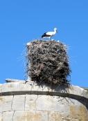Storkʹs nest