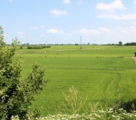 Rice fields in the Po Plain
