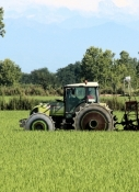 Tractor with steel wheels in a rice field