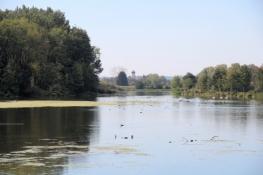 Donauaufwärts von Erbach