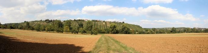 Im Neckartal bei Kleiningersheim