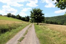 Eder-Radweg bei Bringhausen