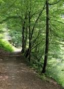 Waldpfad am Wupperufer