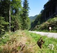 Saint Brais nach St. Ursanne
