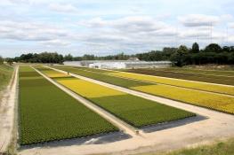 Pflanzenzuchbetrieb bei Zellhausen