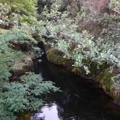 Ruisseau des Rules