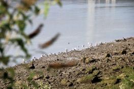 Am Seine-Ufer