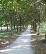 Radweg hinter Gravelines