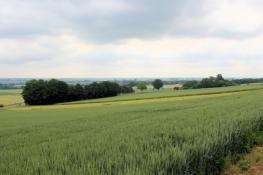 Landschaft bei Nettelstedt