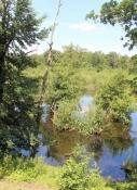 Feuchtgebiet neben dem Rhein-Herne-Kanal
