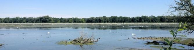 Eching reservoir
