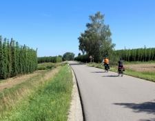Hopfenfelder bei Ratzenhofen