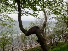 Die Bäume auf dem Kliff zeigen eigenartige Formen auf Grund des harten Klimas