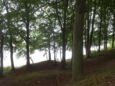 Die Radroute verläuft herrlich durch den Wald entlang der Küste