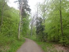 Die Wälder von Nordseeland in ihren saftig grünen Farben im Mai