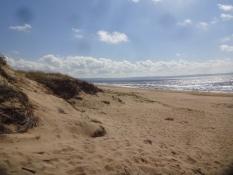 Der Strand und die Dünen der Laholmsbucht erstrecken sich über eine lange Strecke