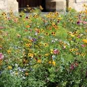 Blumen vor der Propsteikirche in Beckum