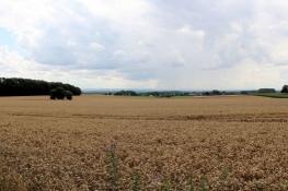 Landschaft südöstlich von Beckum