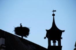 Wemding, Störche auf dem Rathaus