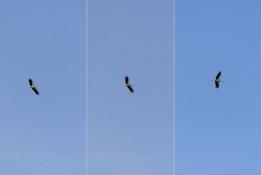 Kreisender Storch