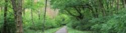 Durch Brandenburgs Wälder