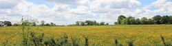 Loire-Radweg bei La Cruaudais