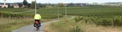 Weinfelder östlich von Bordeaux