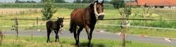 Pferdekoppel bei Ostbevern